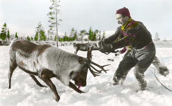 sami reindeer herder 1900s